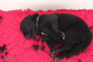 puppy groen